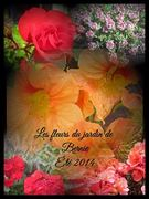 amazing fleursdebernie2