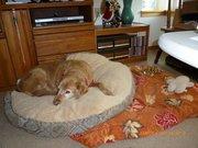 Sunny, my Service dog