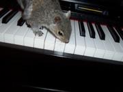 Paulie's 1st piano lesson