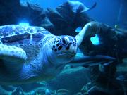 turtleoceanarium