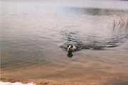 Alfie swimming out