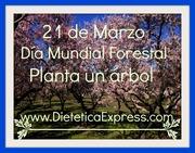 Día Mundial Forestal Planta un Árbol
