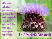 Adivinanza Alcachofa
