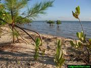 Beach vegetation - www.kayakfari.com