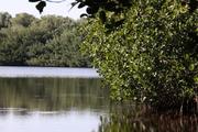 Everglades 2010 & Big Cypruss