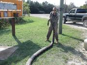 python thanksgiving day 2013 resized