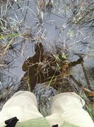 sloggin in the swamp