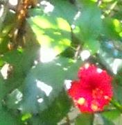 Watercolor-like Flower