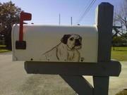 babbs the bulldog