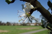 buds on hampton common by Heather