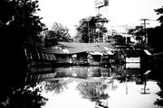 Snepshot in kong1-6 Patumtane of Thailand.