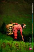 เริ่มต้นชีวิตในสังคมเกษตร