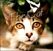 - The-Cat -