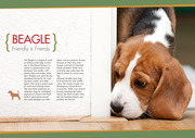 BEAGLE Friendly & Friends