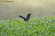 Bird in Bang Pa-In Palace