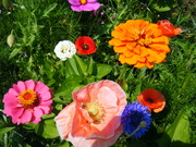 PA, Wild Flowers