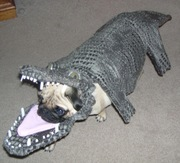 Ridiculous Dog Costumes for Halloween