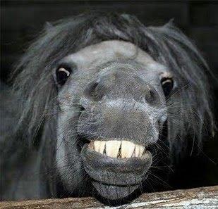 Laughing animals