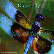 "Card of the Day ""Dragonfly"""