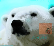 "Card of the Day ""Polar Bear"""