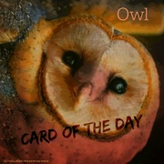 "Card of the Day ""Owl"""