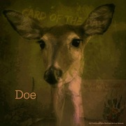 "Card of the Day ""Doe"""