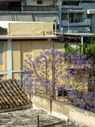 θέα απο το παράθυρο με μόβ δεντράκι