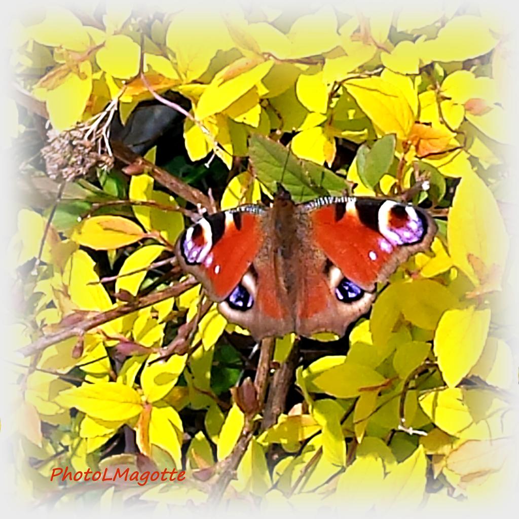 """""""Papillon du jour, amour"""""""