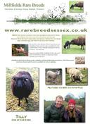 Millfields Rare Breeds