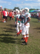 Dolphins on Sideline