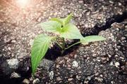 Resiliency Network: An IMPACTcommunity