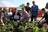 Kilburn Station Planters…