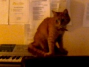 """Playing the theme from """"Cats""""!"""