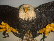 Eagle made by my nephew