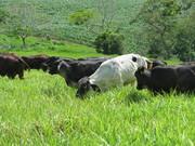 Eficiência Alimentar em Bovinos Leiteiros
