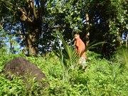 Vegans And Vegetarians In Fiji