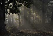 दिव्यानुभूतियों से भरे वन.....