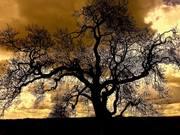 The Tree at Newgrange