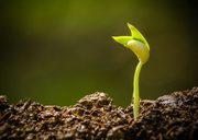 Seeding Soul Stories: A 5-week Experiential Writing Program