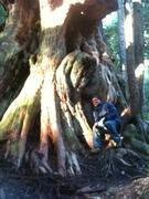 GW  - Avatar Grove