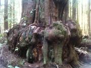 Avatar Grove Hike - Winter Break 2010