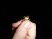 My little amphibian friend