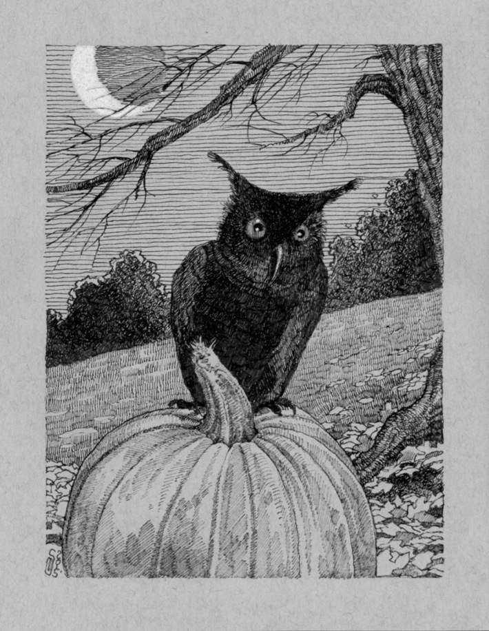 75 Pumpkin Owl