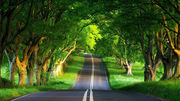 Driving on a Beautiful Green Road