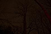 Campsite-29-Starry-Night