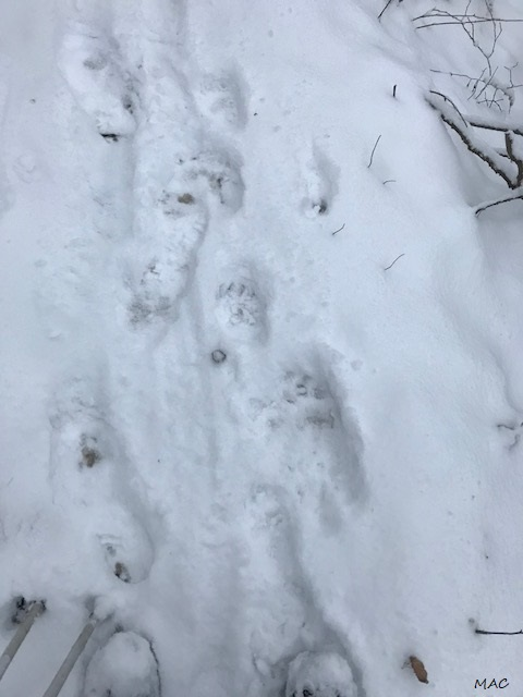 Bear Tracks just min ahead