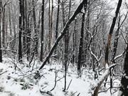 Baskins Creek Trail