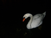 alb-negru