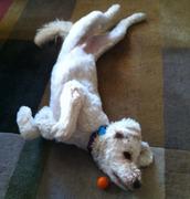 Kula the contortionist!