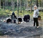 Marilyn Monroe and bears